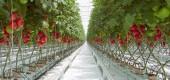 قرارداد احداث گلخانه سبزی و صیفی در شرکت کشاورزی سیرجان بنیاد