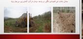 اصلاح و جايگزينی باغات فرسوده در شرکت کشاورزی سيرجان بنياد